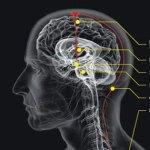 cara meningakatkan otak